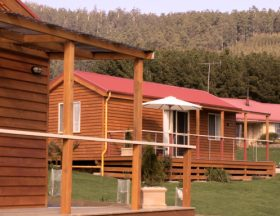 Maydena Country Cabins Accommodation  Alpaca Stud