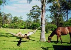 Neds Bed Horse O Tel - Broome Tourism