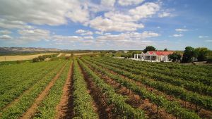 1837 Barossa Luxury Vineyard Cottages - Broome Tourism
