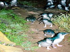 Penneshaw Penguin Centre - Broome Tourism