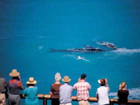 Whale Watching At Head Of Bight - Broome Tourism