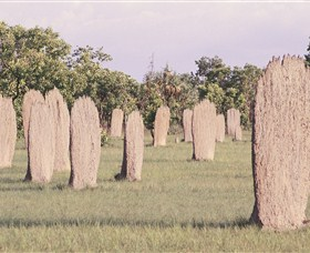 Magnetic Termite Mounds - Broome Tourism