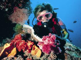 Nine Mile Reef Dive Site - Broome Tourism