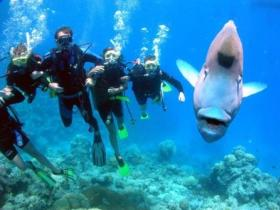 Jew Shoal Dive Site - Broome Tourism