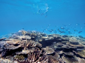 Australian Institute of Marine Science - Broome Tourism