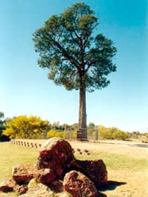 Robbers Tree - Broome Tourism
