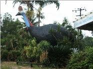 The Big Cassowary - Broome Tourism