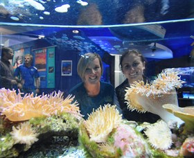 Solitary Islands Aquarium - Broome Tourism