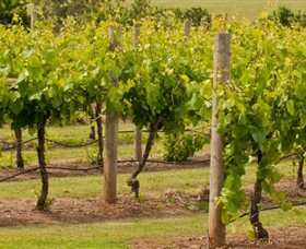 Mt Coghill Vineyard - Broome Tourism