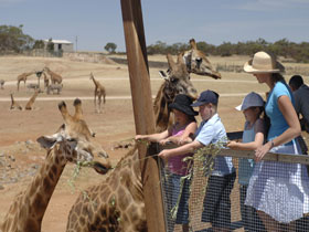 Monarto Open Range Zoo - Broome Tourism