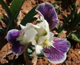 Sunshine Iris Nursery - Broome Tourism