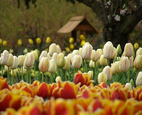 Tulip Top Gardens - Broome Tourism