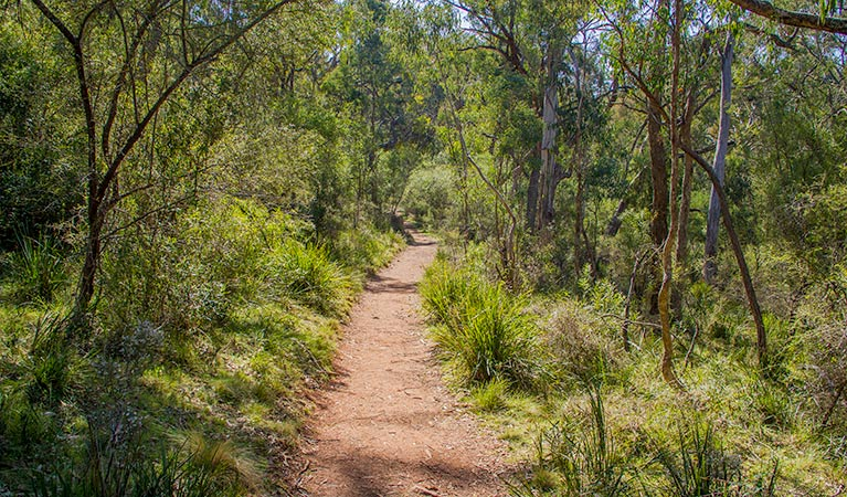 Mares Forest Creek walking track - Broome Tourism