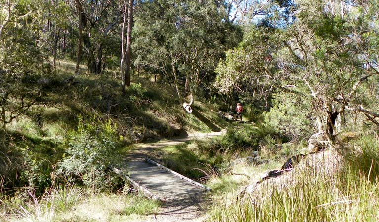 Wollomombi walking track - Broome Tourism