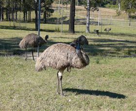 Glen Ian Ostrich and Emu Farm - Broome Tourism
