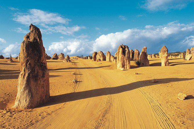 Pinnacles Desert Koalas and Sandboarding 4WD Day Tour from Perth