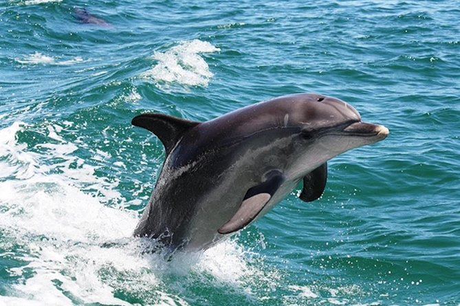 Half-Day Mandurah Canals  Dolphin Watch Tour - Broome Tourism