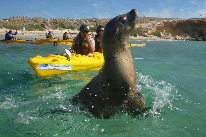 Penguin and Seal Island Kayak Tour - Broome Tourism