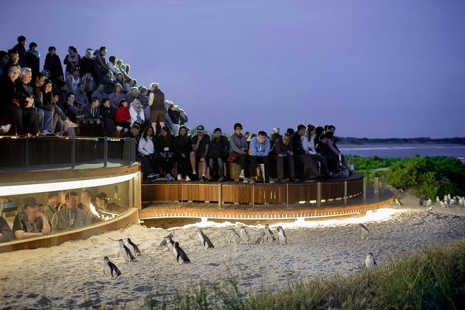 1 Day Private Phillip Island Tour VIP Charter up to 9 People - Broome Tourism