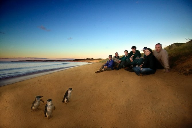 Phillip Island Ultimate Penguin Eco Tour or Skybox Experience - Broome Tourism