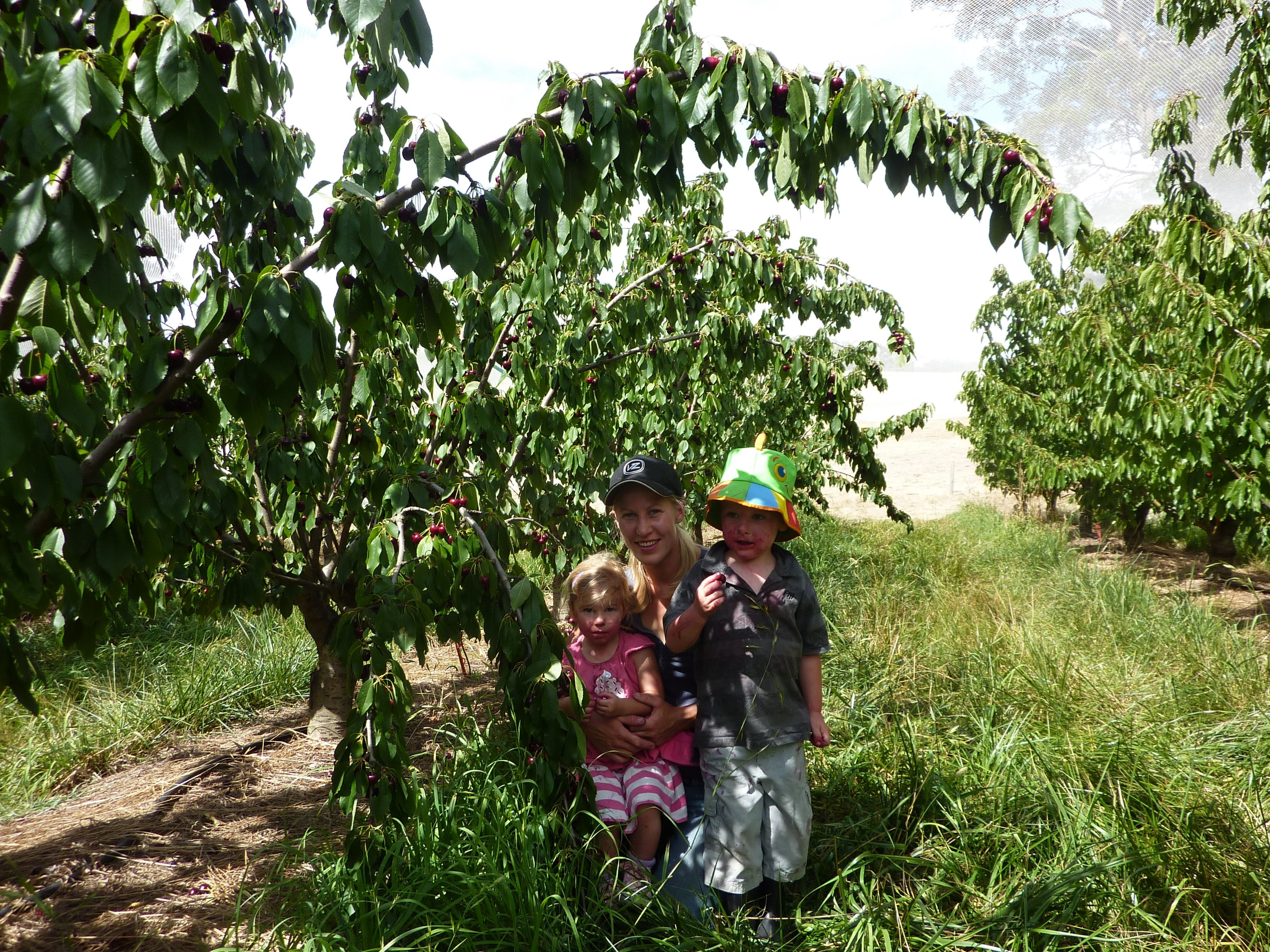 Harben Vale Pick Your Own Cherries - Broome Tourism