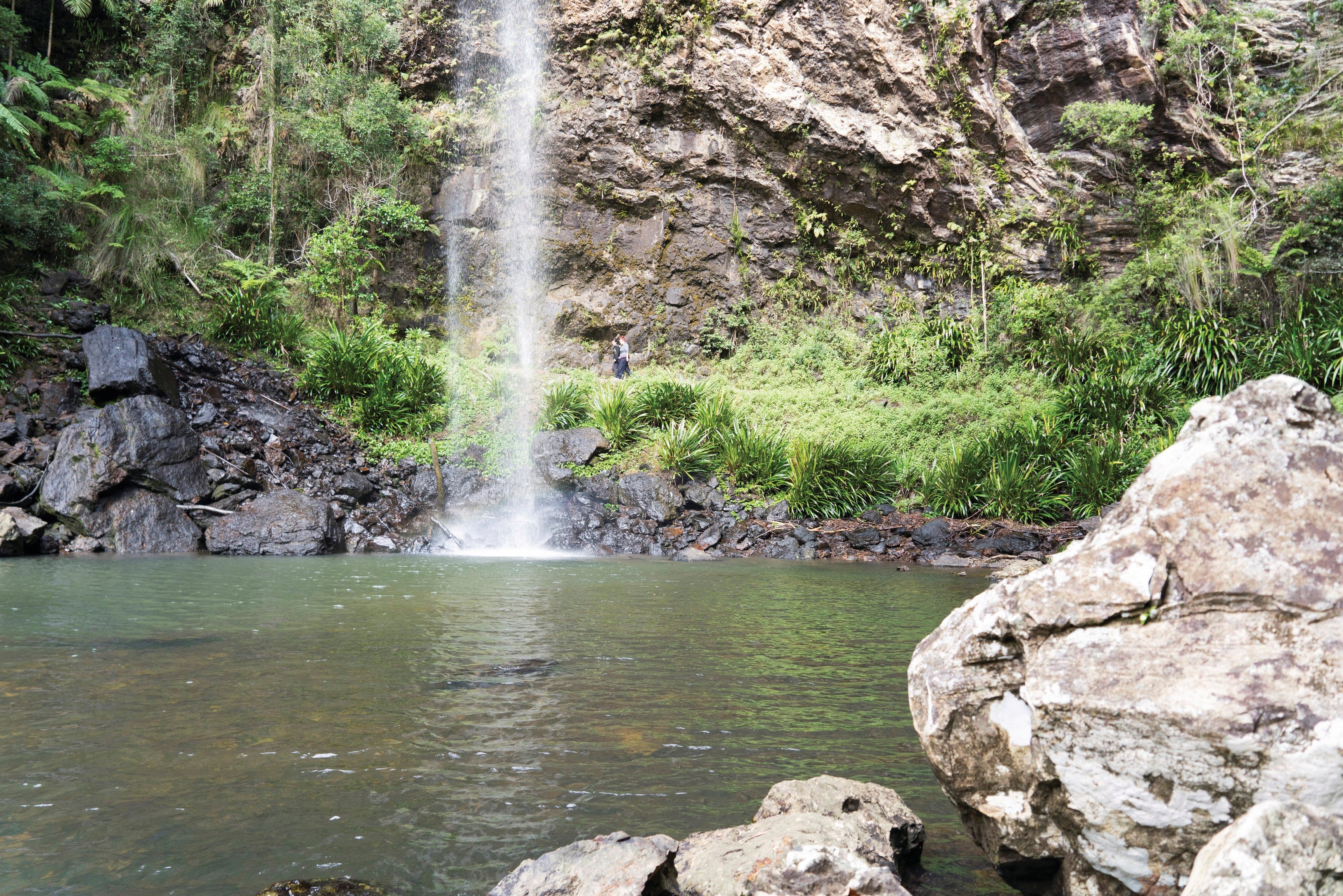 Twin Falls Circuit Springbrook National Park - Broome Tourism