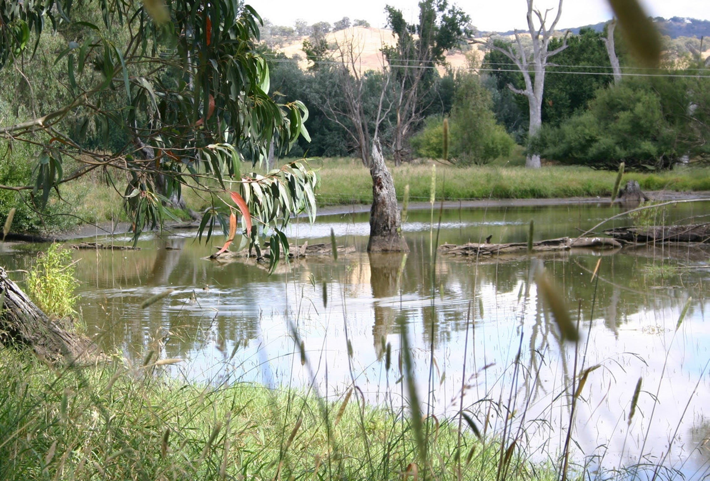 Tumut Wetlands - Broome Tourism
