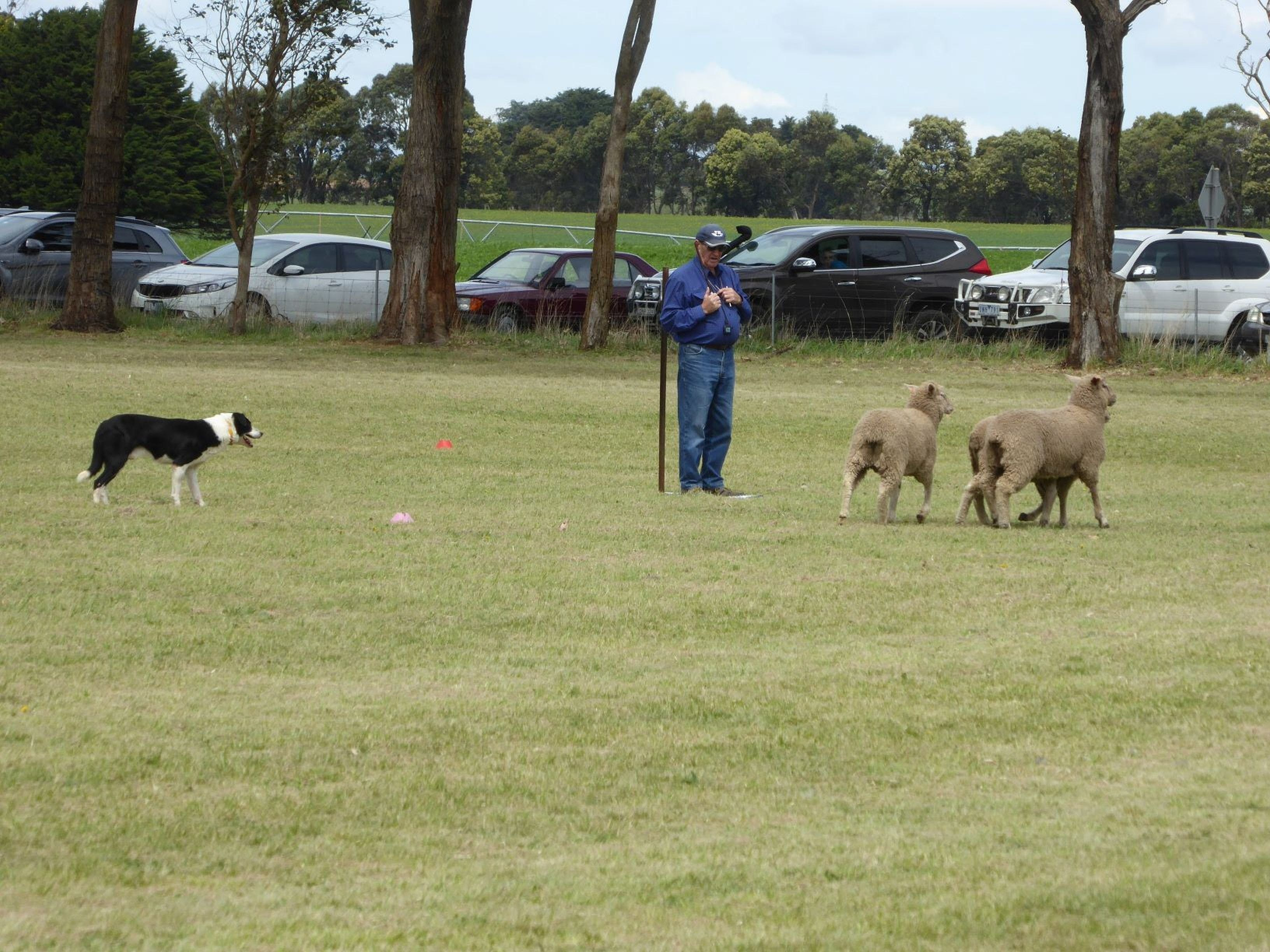Dean Sheepdog Trials - Old Sniff Classic - Broome Tourism
