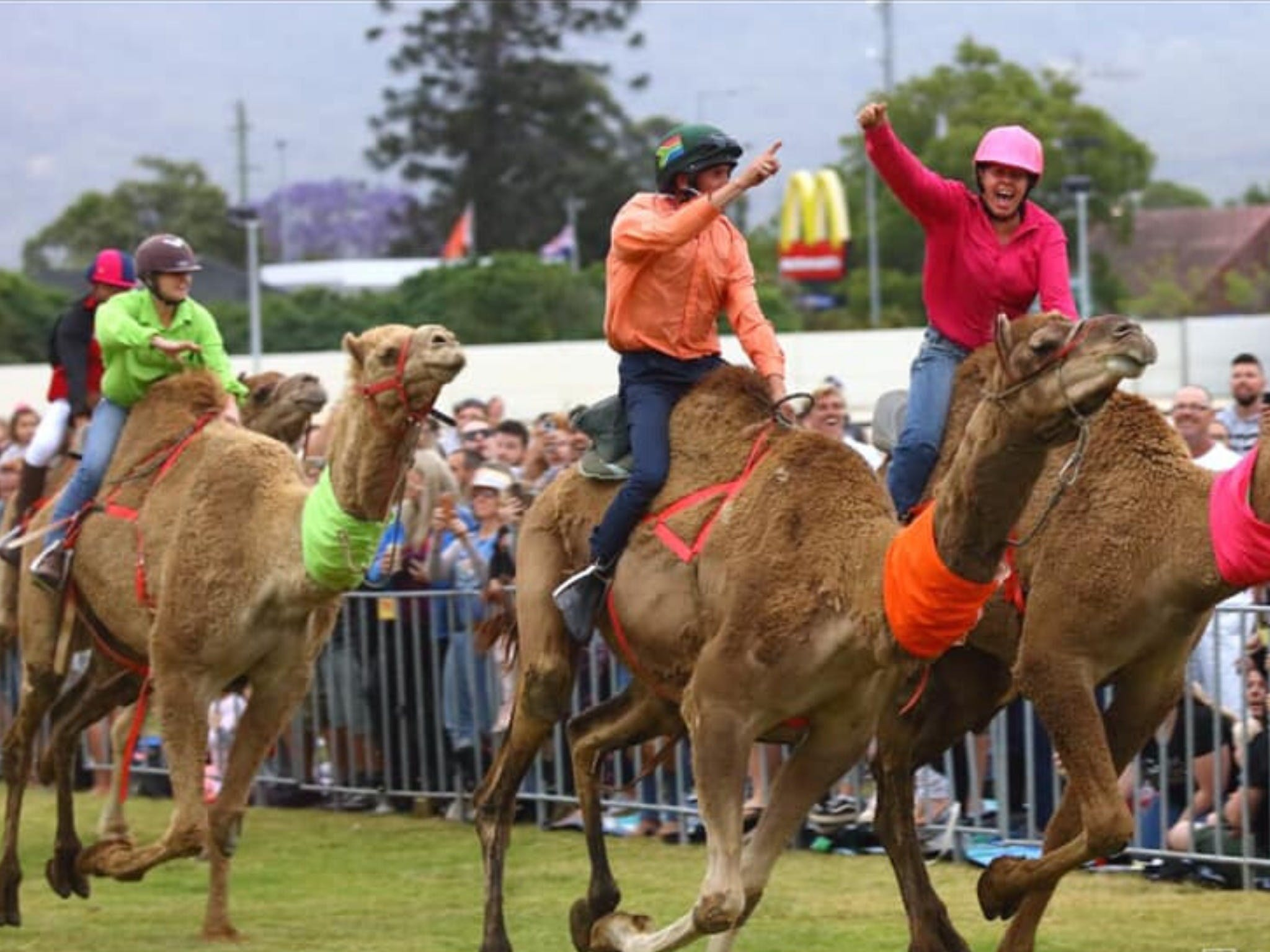 Camel Races at Penrith Paceway - Broome Tourism