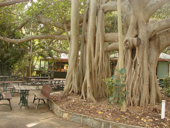 Gardens Tearooms - Broome Tourism